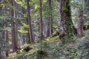 Bergmischwald im Wettersteingebirge